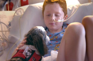 Intermountain Therapy Animals - Donate Now